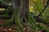 Turnica National Park, Poland 1510-01361C