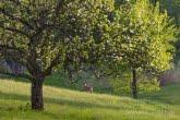 Turnica National Park, Poland 1605-00370C