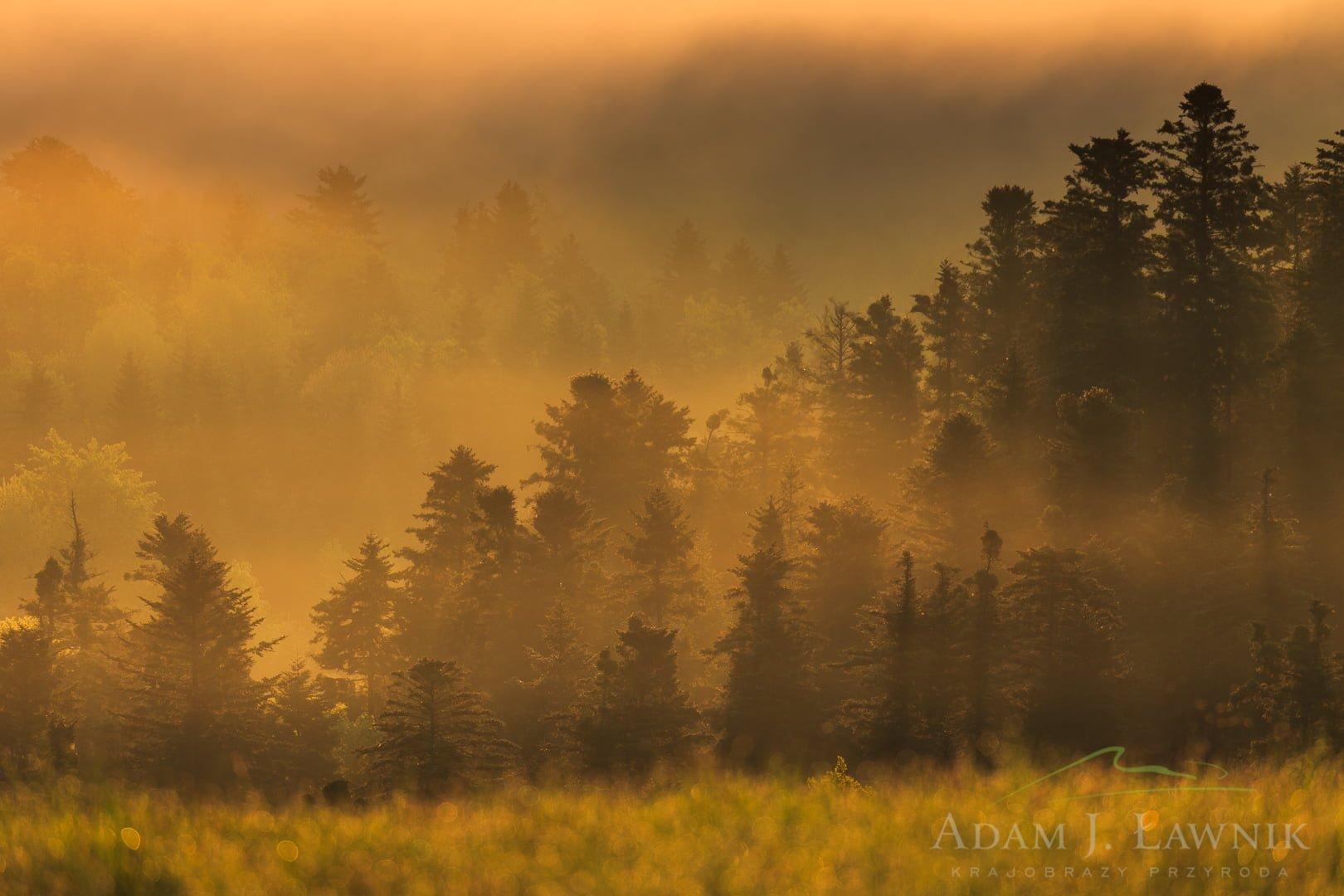 Turnica National Park, Poland 1605-00390C