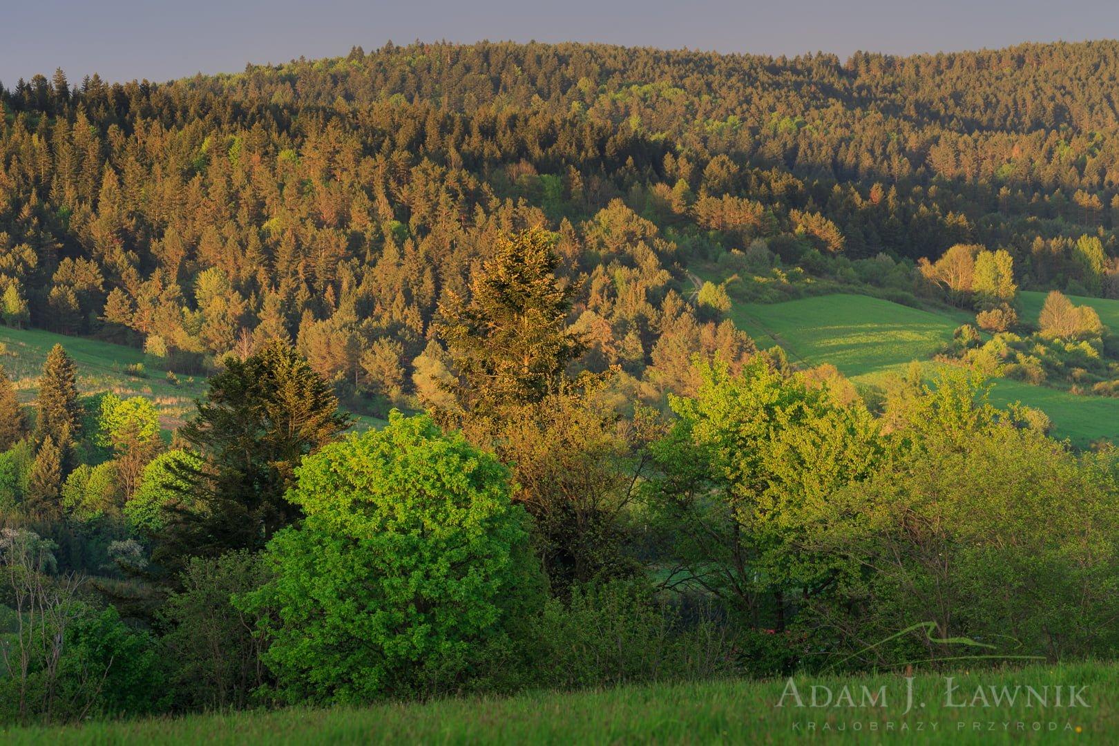 Las i śródleśne polany pod koniec dnia