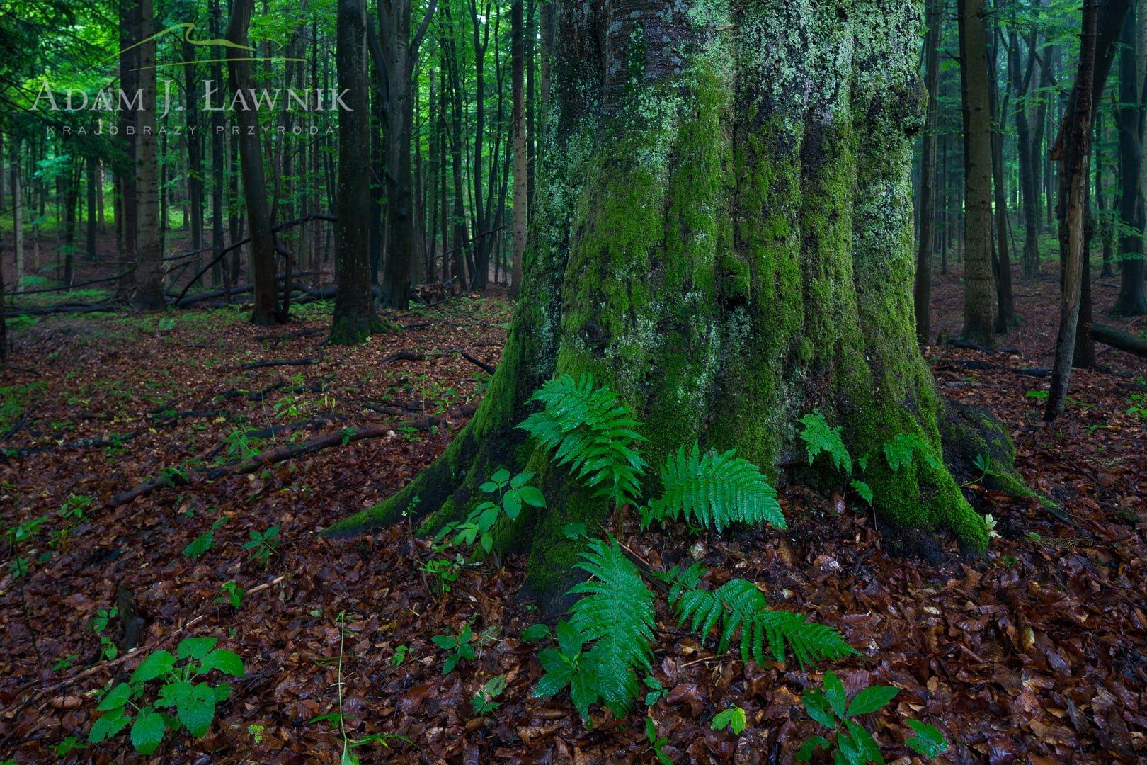Turnica National Park, Poland 1606-00341C
