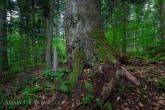 Turnica National Park, Poland 1606-00363C