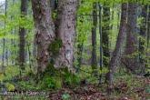 Turnica National Park, Poland 1704-00432C