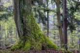 Turnica National Park, Poland 1704-00440C