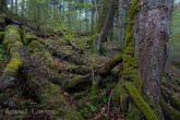 Turnica National Park, Poland 1704-00444C