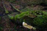 Turnica National Park, Poland 1704-00445C