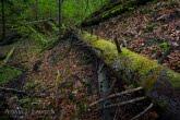 Turnica National Park, Poland 1704-00495C