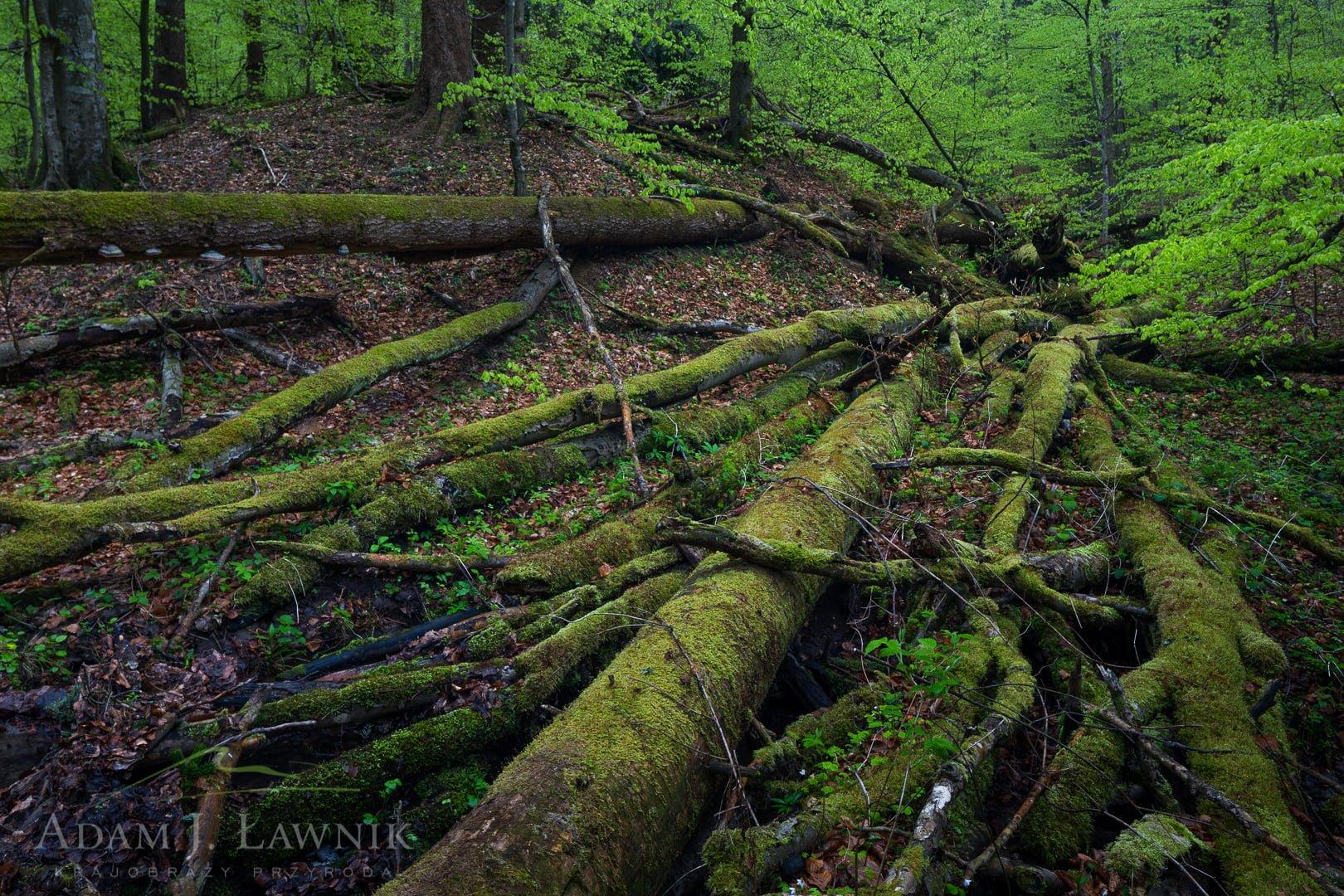 Turnica National Park, Poland 1704-00498C