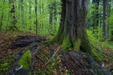 Turnica National Park, Poland 1704-00513C