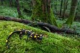 Turnica National Park, Poland 1709-00843C