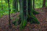 Turnica National Park, Poland 1709-00845C