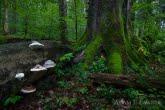 Turnica National Park, Poland 1709-00846C