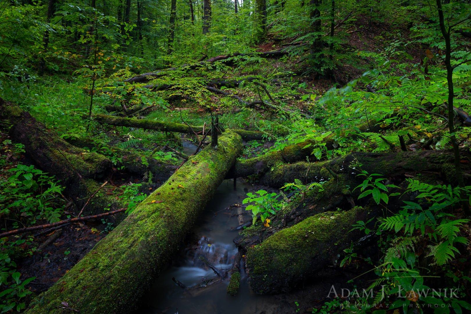 Turnica National Park, Poland 1709-00857C