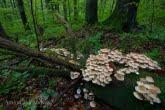 Turnica National Park, Poland 1709-00859C