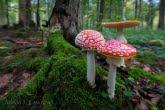 Turnica National Park, Poland 1709-00878C