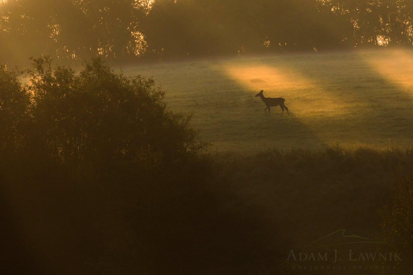 Turnica National Park, Poland 1709-00884C