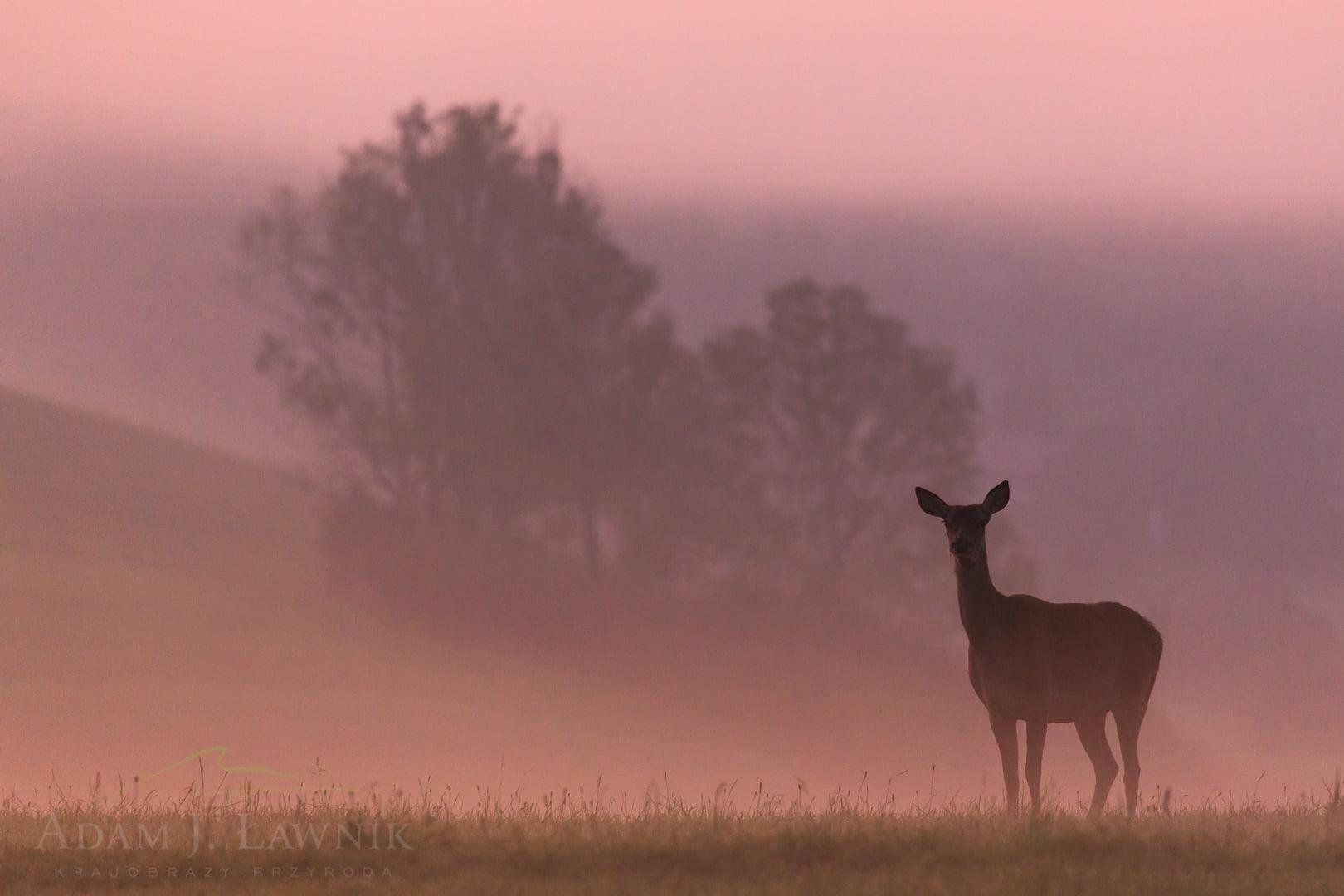 Turnica National Park, Poland 1709-00894C