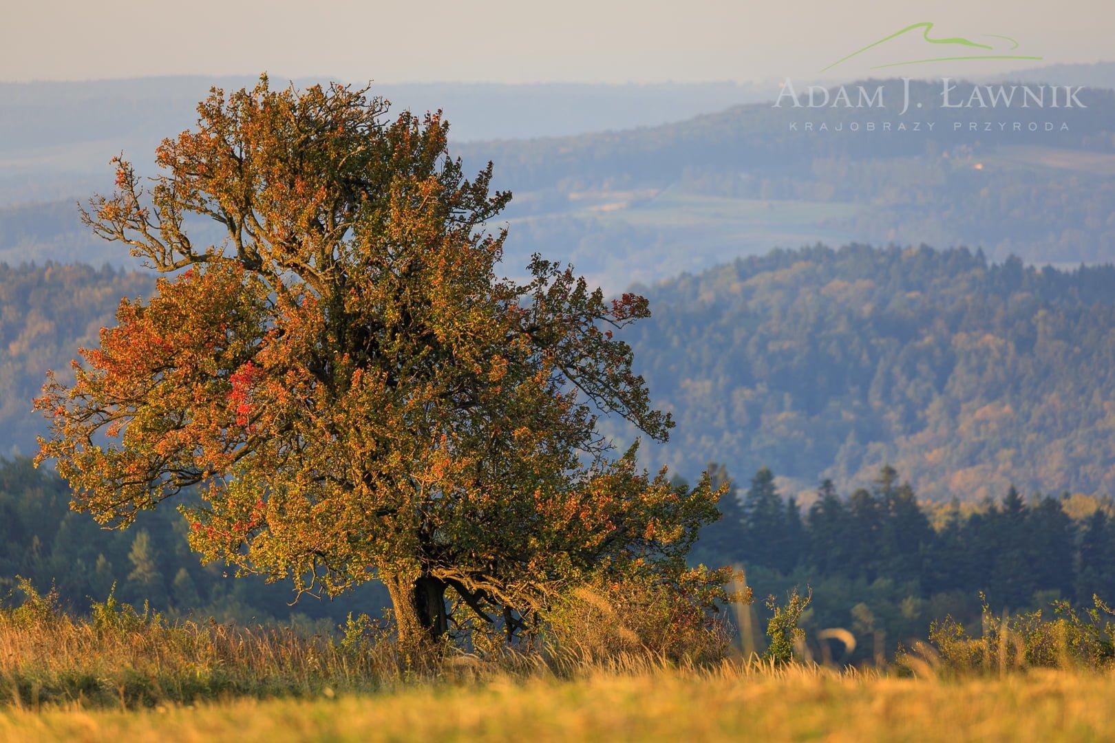 Turnica National Park, Poland 1709-00922C