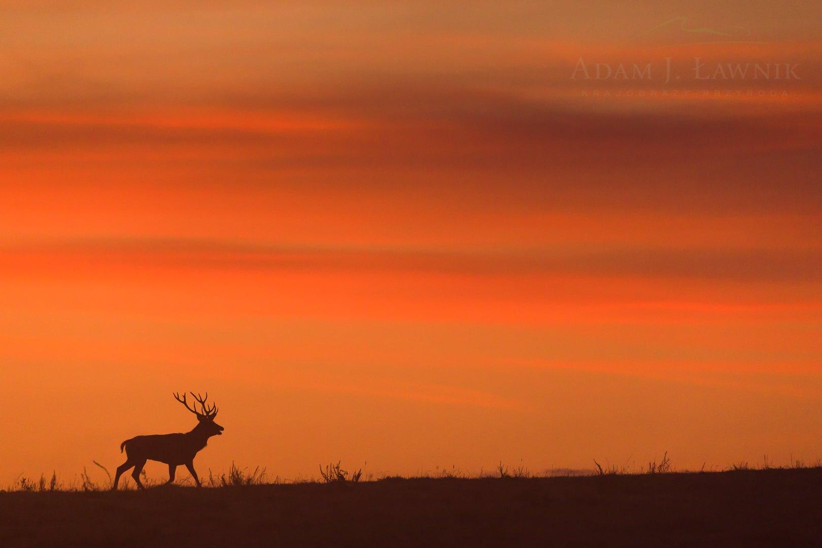 Turnica National Park, Poland 1709-00954C