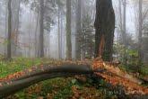 Turnica National Park, Poland 1810-00533C