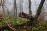 Turnica National Park, Poland 1810-00534C