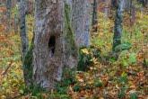 Turnica National Park, Poland 1810-00535C