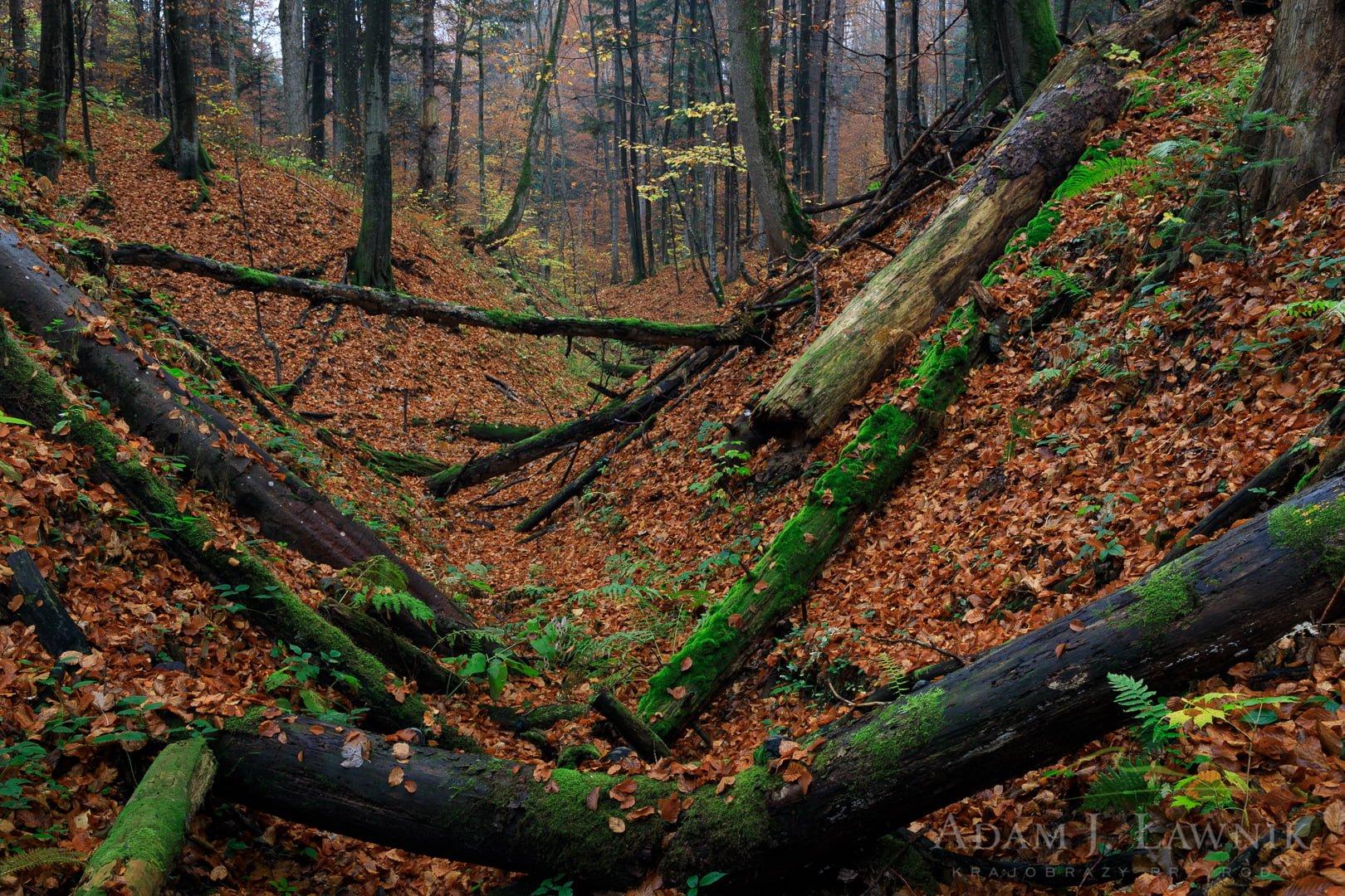 Wąwóz w lesie