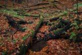 Turnica National Park, Poland 1810-00540C