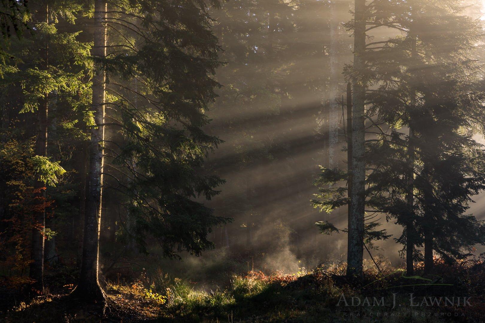 Turnica National Park, Poland 1810-00557C