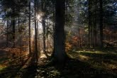 Turnica National Park, Poland 1810-00560C