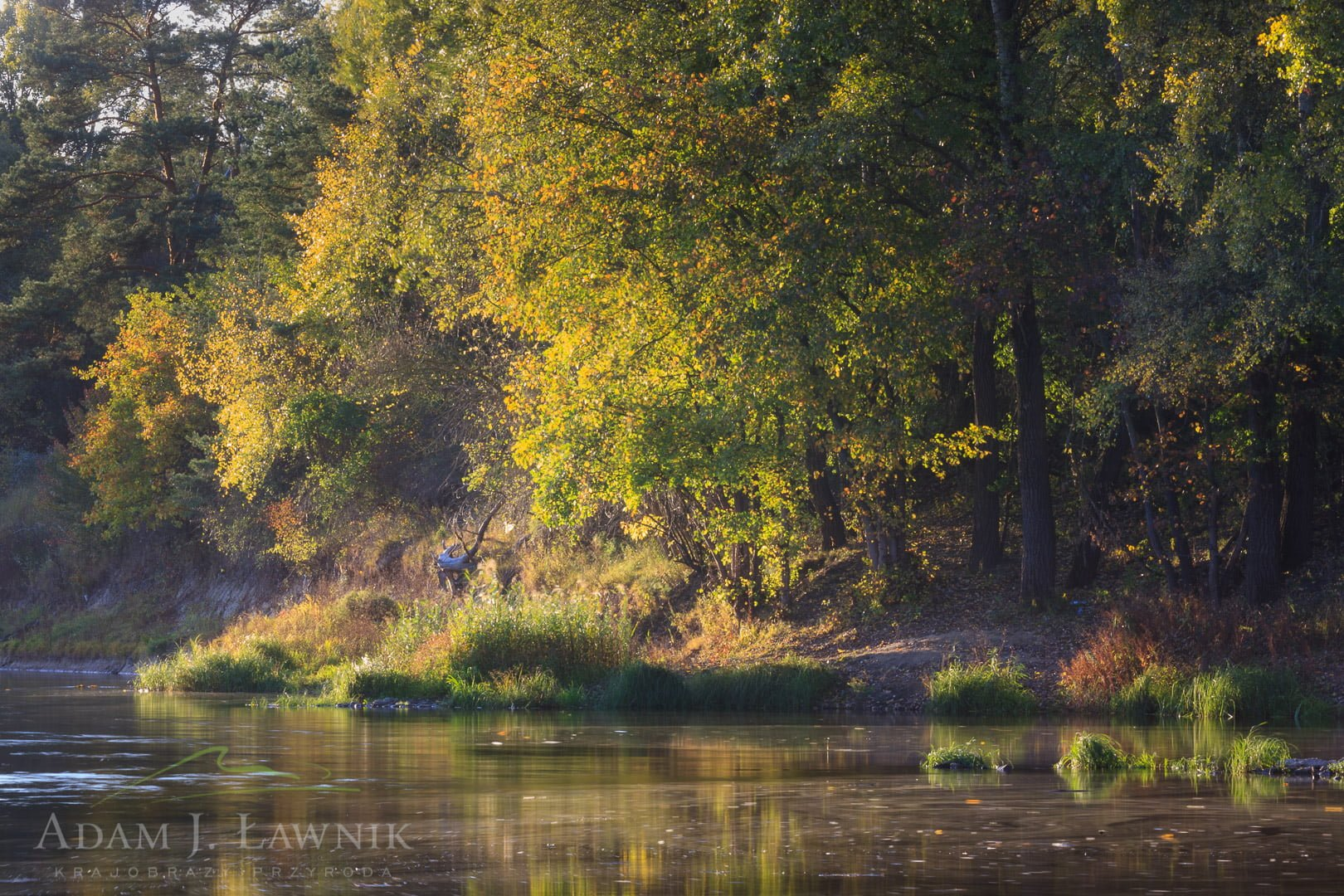 Wielkopolska National Park, Poland 1110-02088C