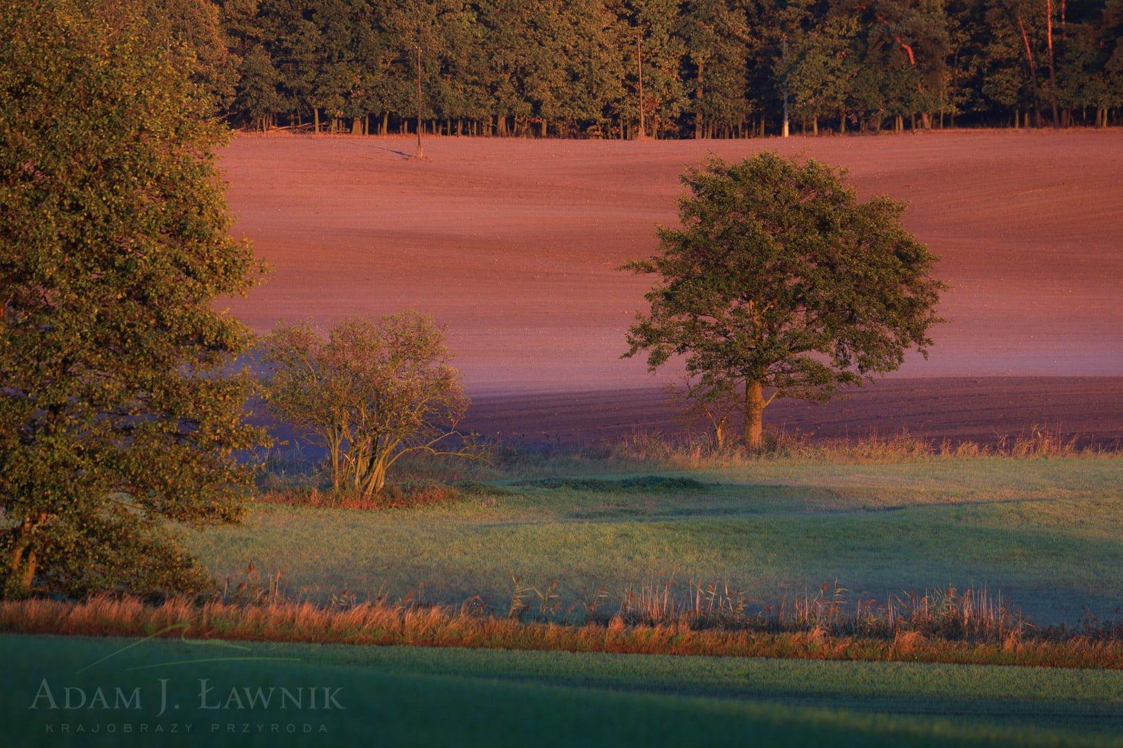 Wielkopolska National Park, Poland 1110-02094C
