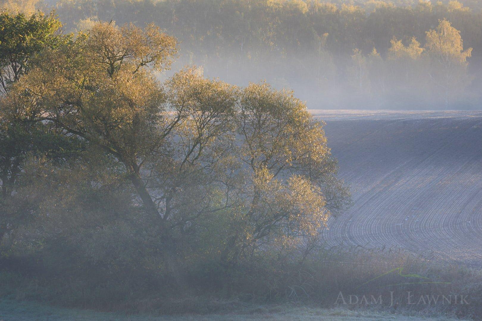 Wielkopolska National Park, Poland 1110-02103C