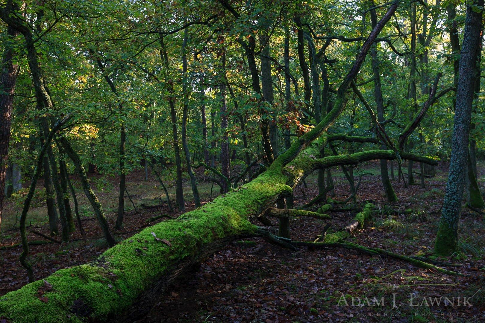 Wielkopolska National Park, Poland 1110-02106C