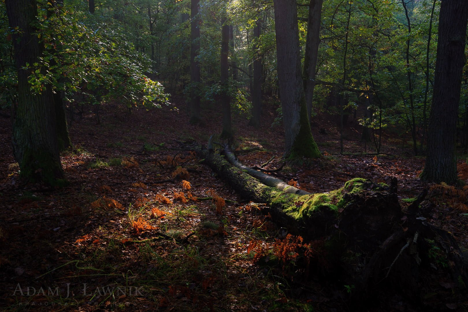 Wielkopolska National Park, Poland 1110-02107C