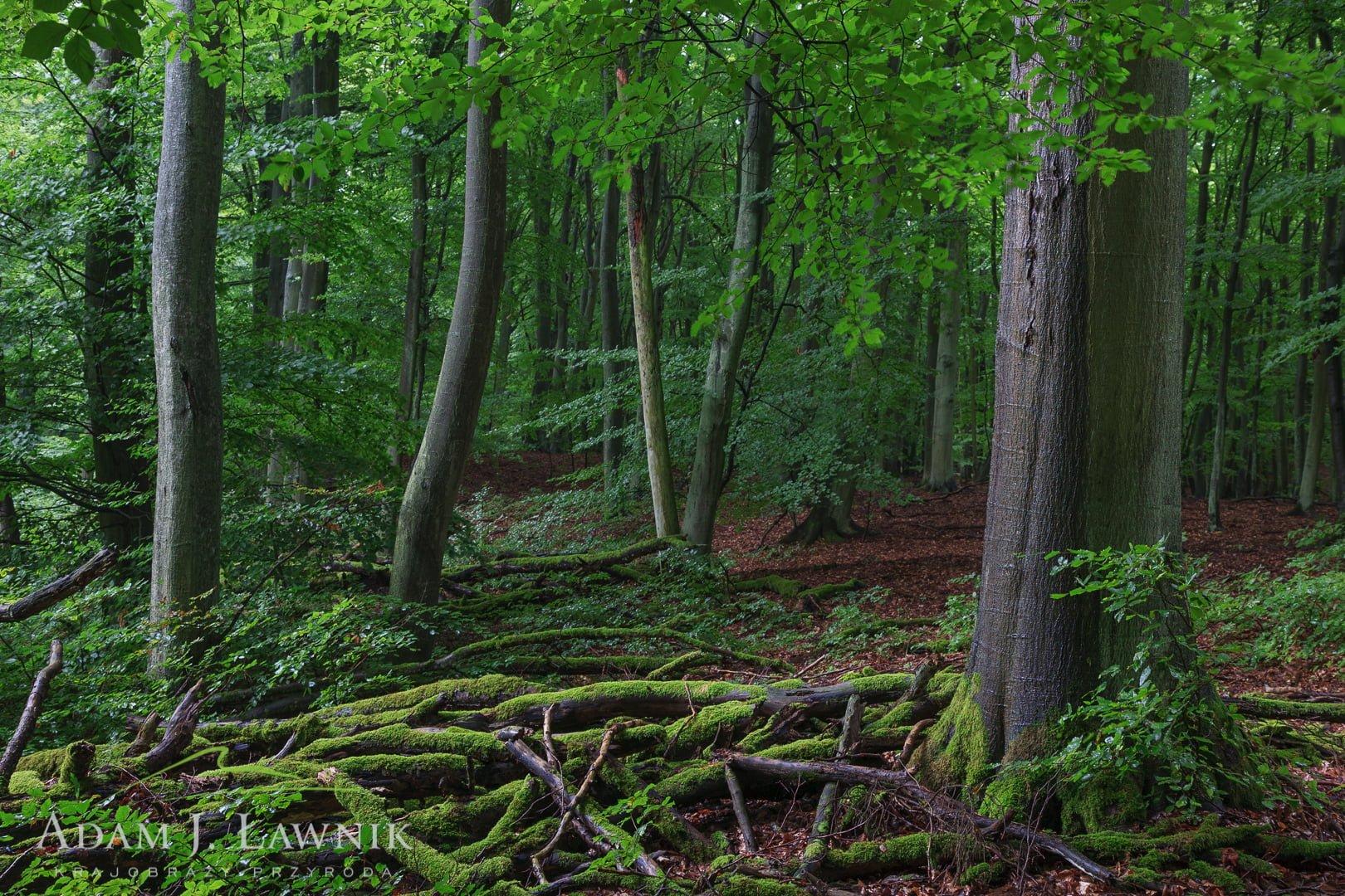 Wolin National Park, Poland 1008-00929C