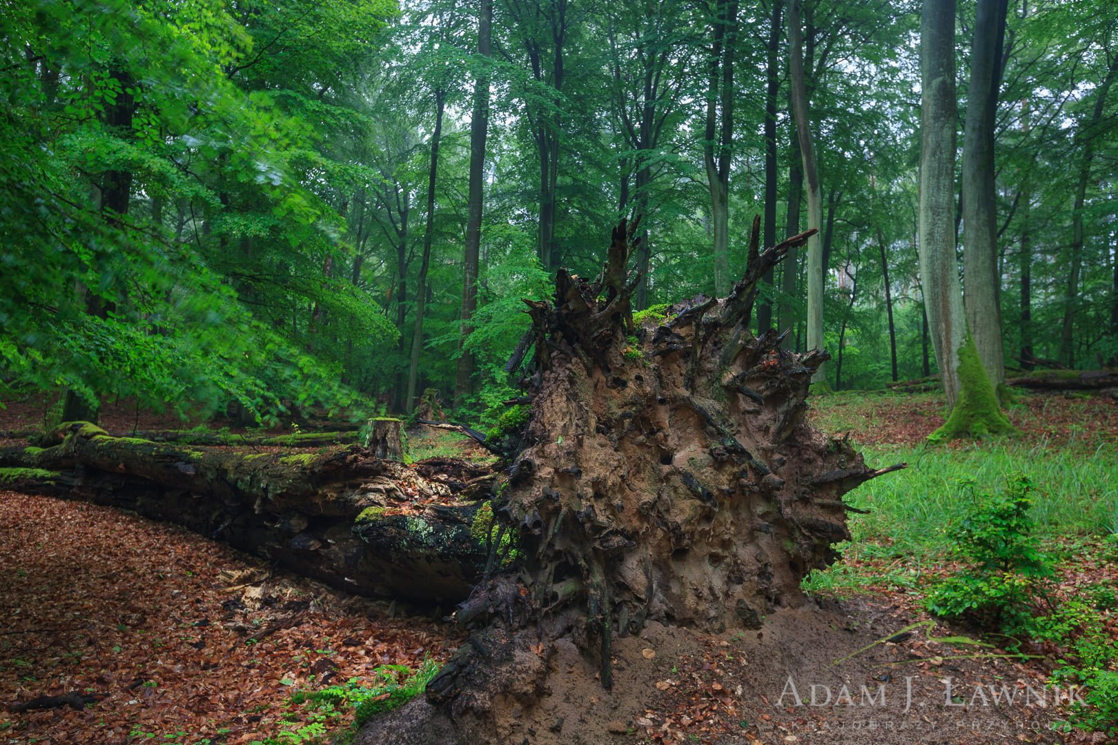 Wolin National Park, Poland 1107-01571C