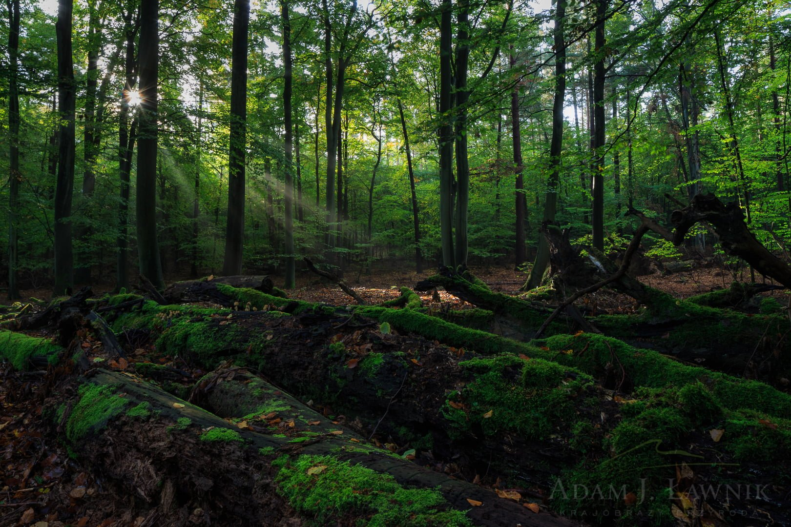 Wolin National Park, Poland 1410-01062C