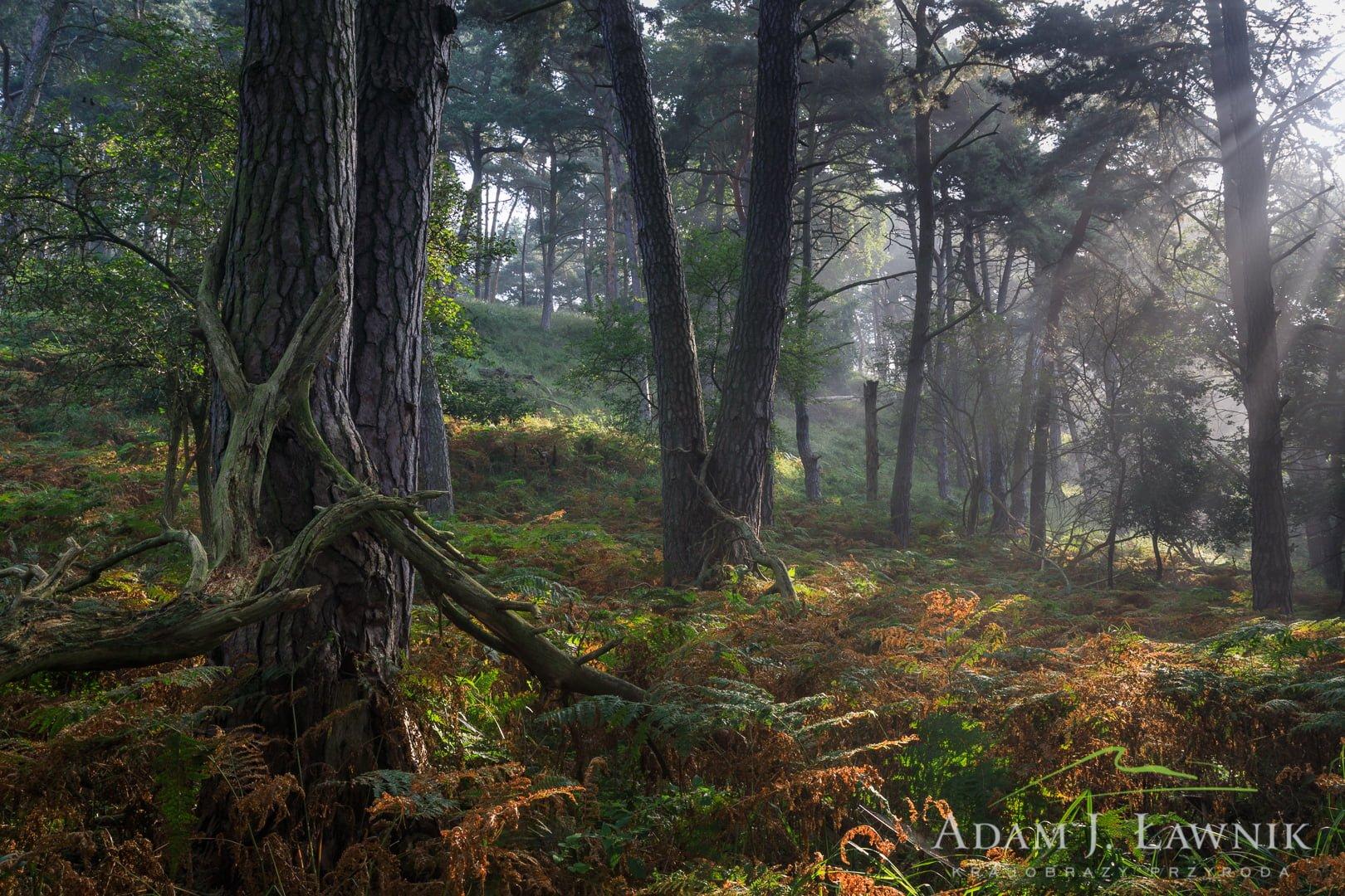 Wolin National Park, Poland 1708-01083C