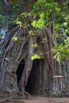 Cambodia 0908-00879C