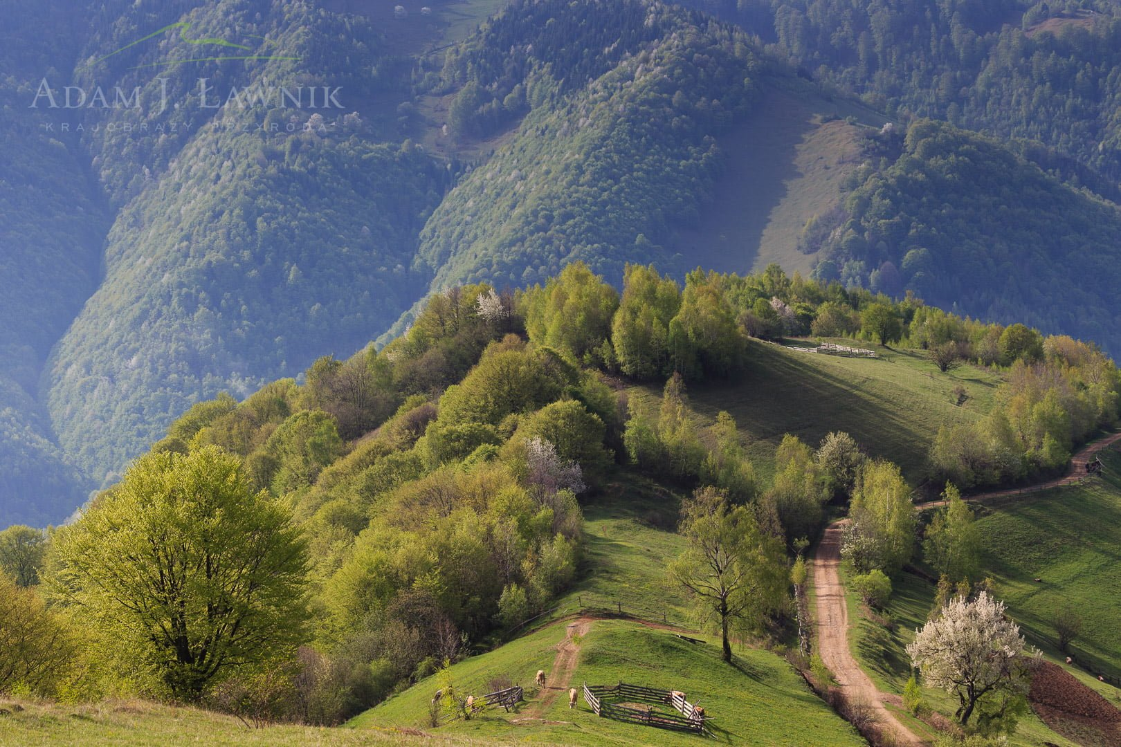 Romania 1305-00247C