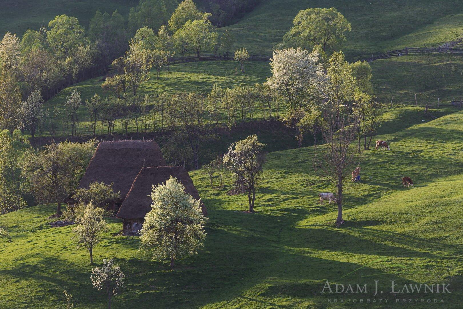 Romania 1305-00283C