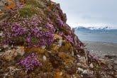Spitsbergen, Arctic 0606-00263C