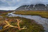 Spitsbergen, Arctic 0606-00914C