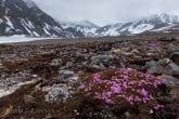 Spitsbergen, Arctic 0606-01282C