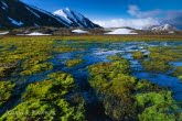 Spitsbergen, Arctic 0606-02727P