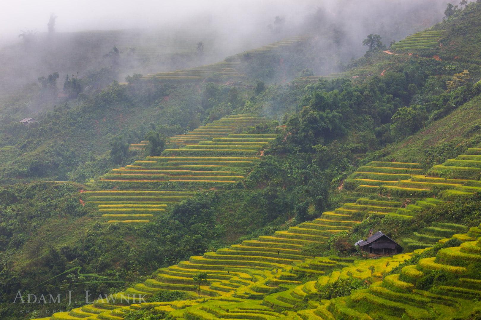 Vietnam 0909-01134C