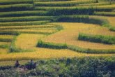 Vietnam 0909-01283C